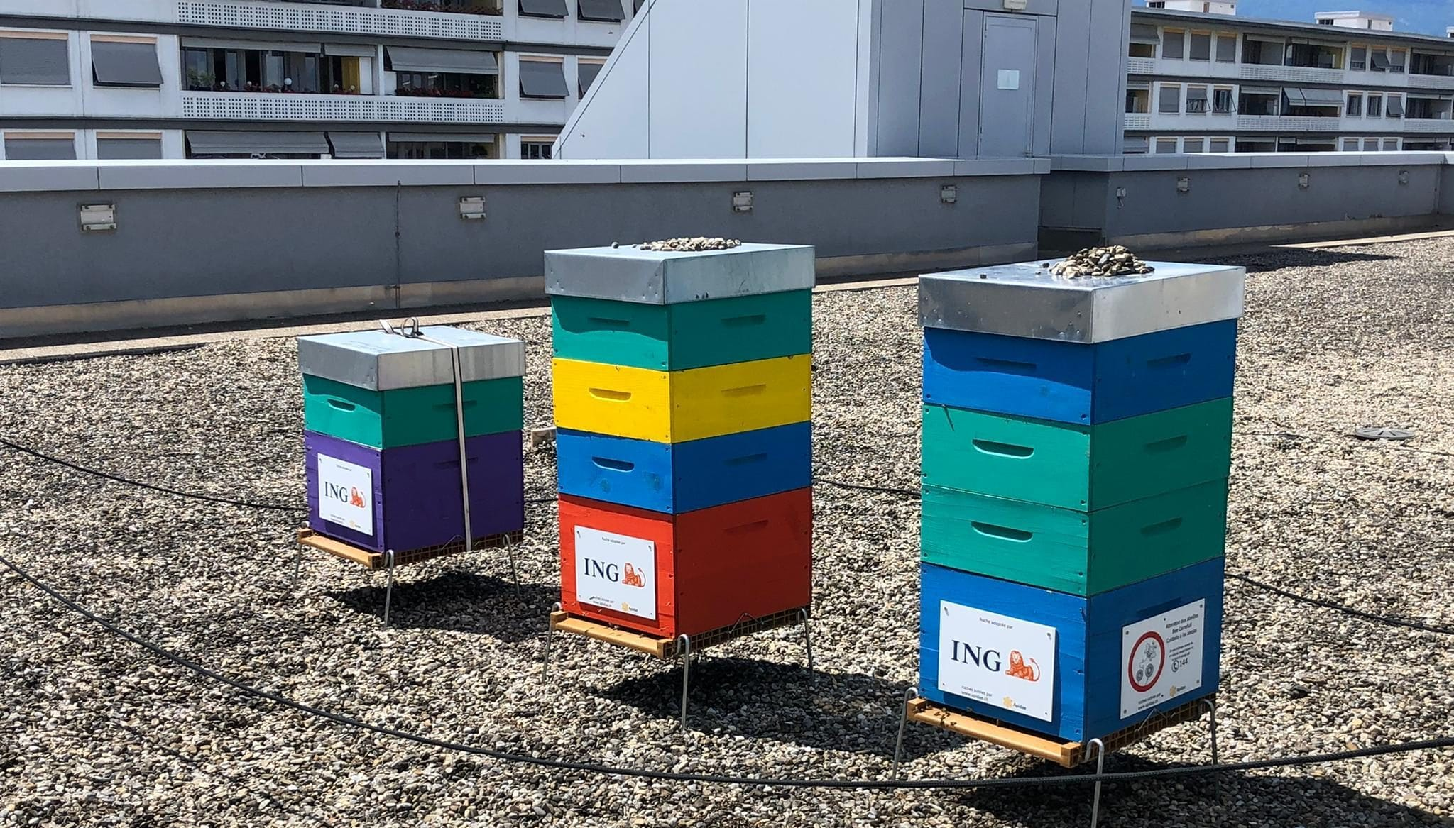 Des ruches sur un toit d'entreprise